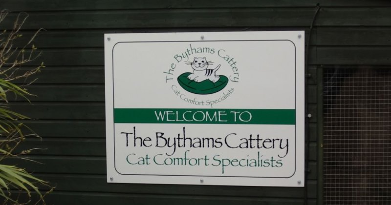 Welcome to the Bythams Cattery